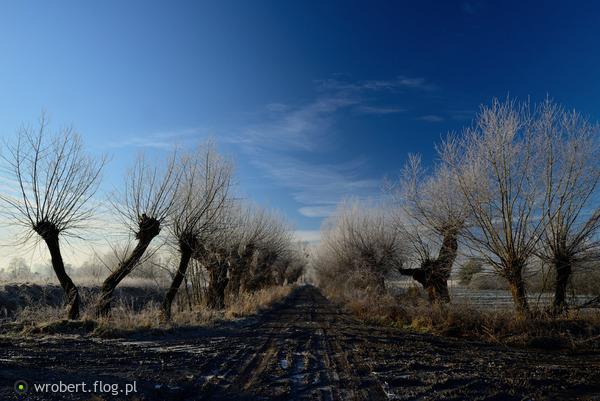 http://s25.flog.pl/media/foto_middle/12364292_nagie-wierzby-szadz-w-srebrne-cekiny-ubiera-.jpg